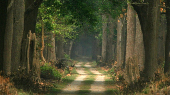 Forest-Path-1