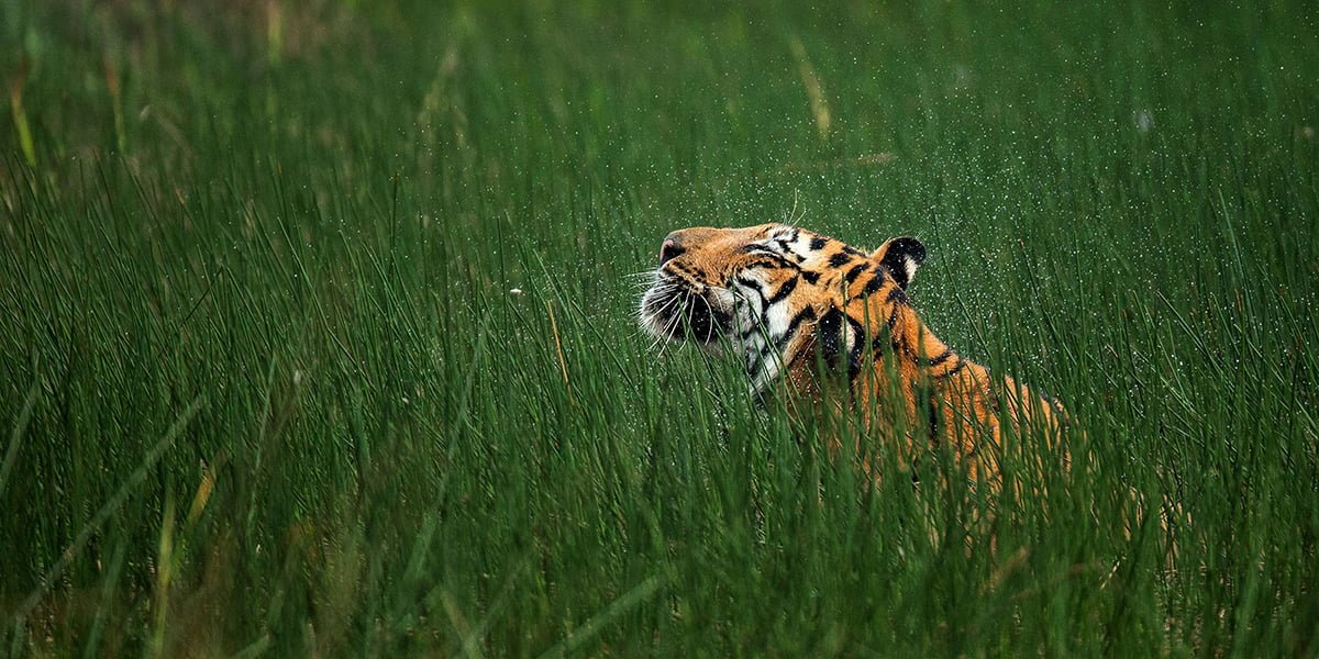 Wildlife Diversity in India